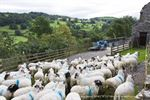 Picture of Cumbria - Troutbeck, The Lakes 2009 - N1880