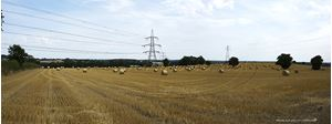 Picture of Yorks - Coxwold, Bales of Hay Panorama 2014 - N2948